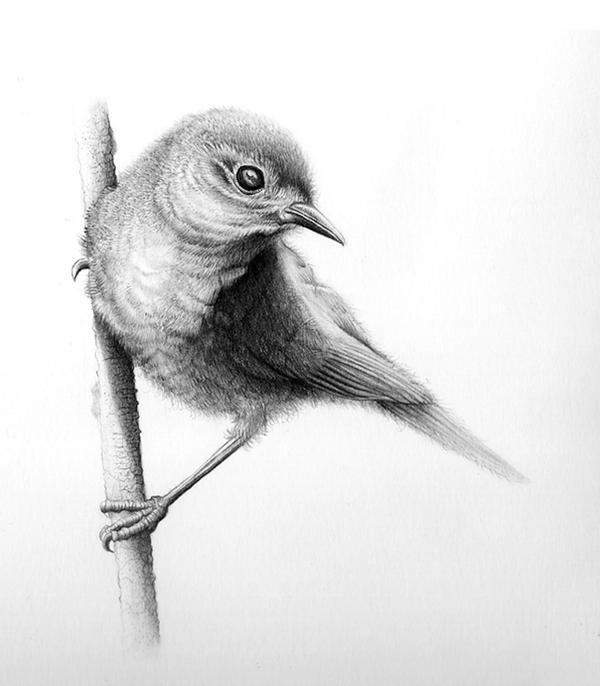 bird drawingconbatiente on deviantart