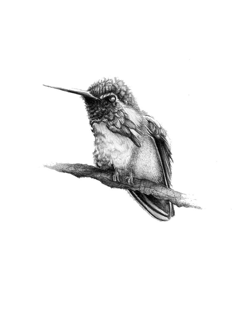 Humming bird by Conbatiente on DeviantArt