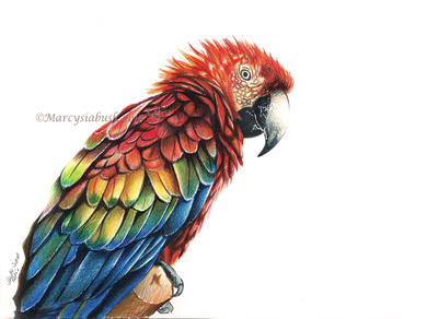 Parrot Magic