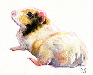 Guinea pig by Maddepos