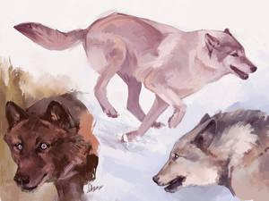 Wolvestudies