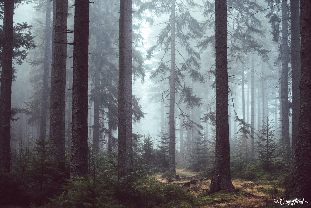 Misty Forest by Doneofficial