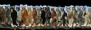 Warrior Cat preset bundle