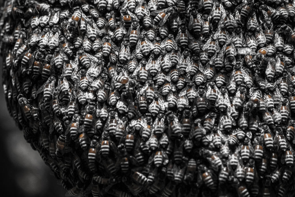 Bee Hive by ShamanQueen1994