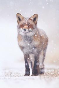 StoryFox15's Profile Picture