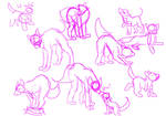 Canine Poses