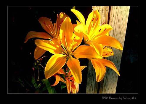 FP64 Flowers