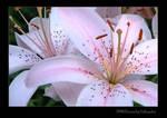 FP68 Flowers