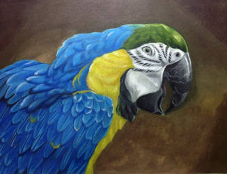 Blue and Gold Macaw V.2 by ktflowerm