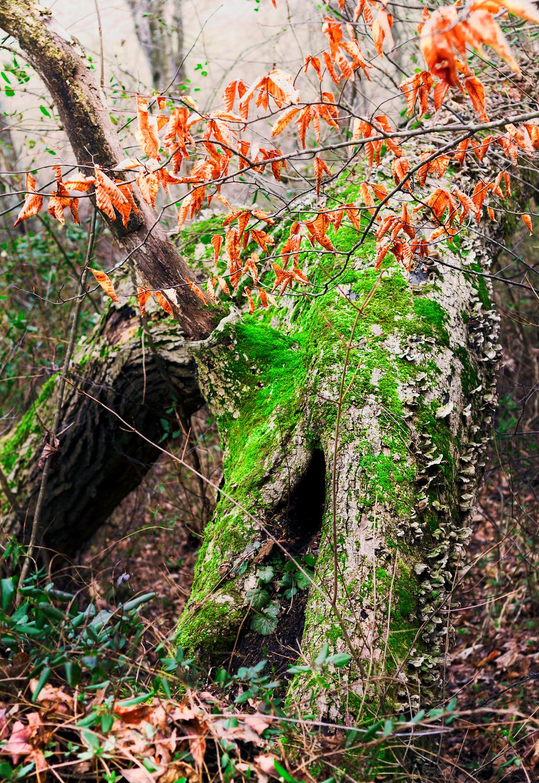 Woodland Serenity by JonUriah
