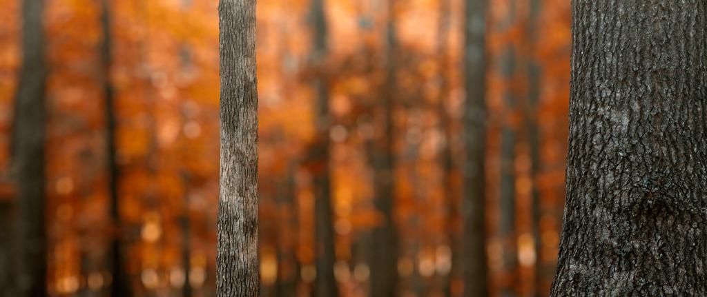 Fall Oaks by UriahGallery