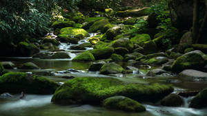Stream of Mossy Boulders