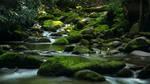 Stream of Mossy Boulders