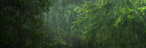 Tranquil Rain