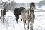 A Horse In January