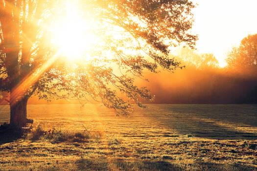Sunshine Hideaway