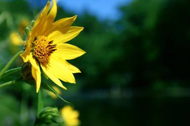 River Flower