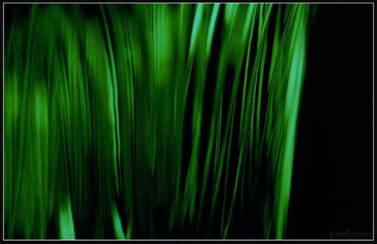 Your green wonder