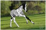 Future RDS Horse?