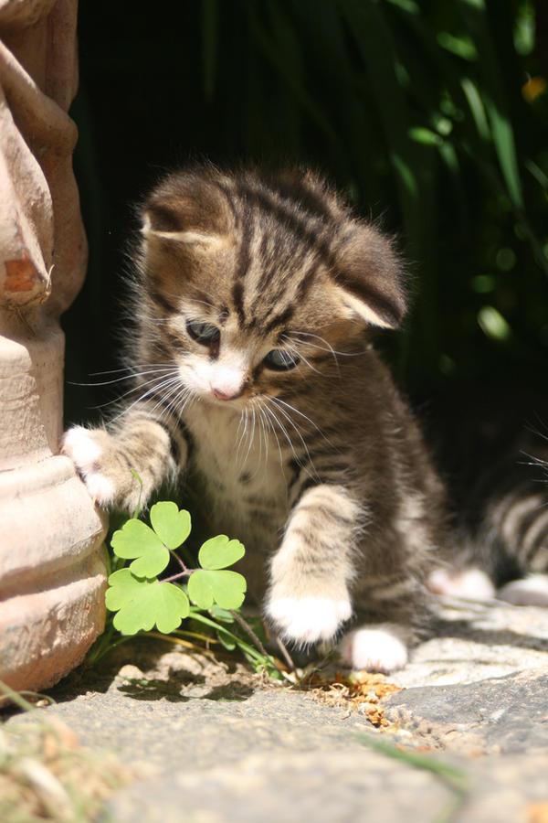 A April's Fool Kitten by Jullelin