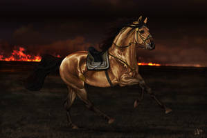 The Heart of a War Horse by Jullelin