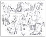 Funny Ponies