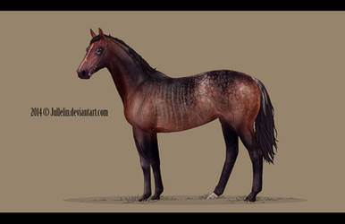 Thoroughbred Commission #4