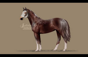 Thoroughbred Auction # 6 - Ended by Jullelin