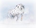 Spots In Snow