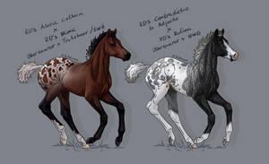 Obertaurer Cross Foals- Sold