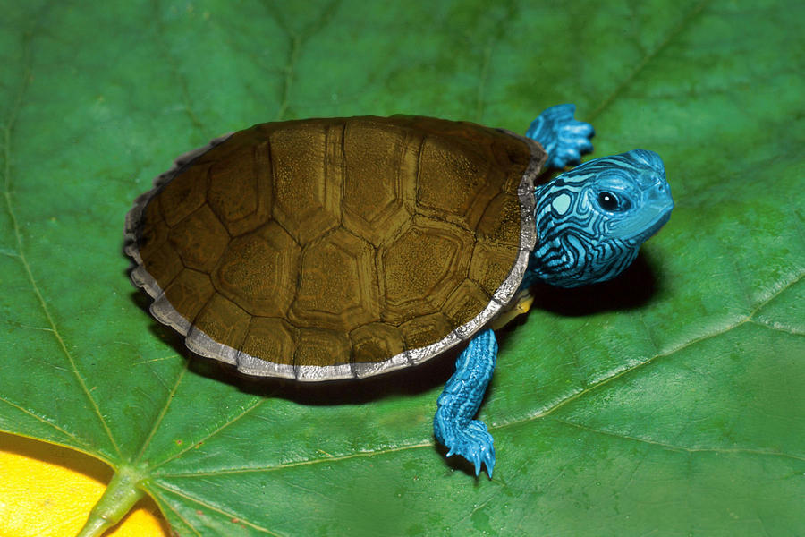 Squirtle (Real Life) by Fr0gman on DeviantArt