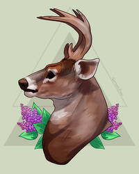 Deer and lilacs