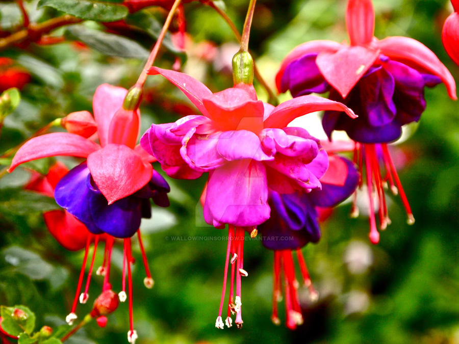 Pink and purple flowers by wallowinginsorrow on deviantart pink and purple flowers by wallowinginsorrow mightylinksfo