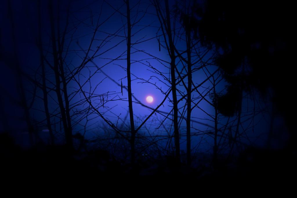 blaue stunde by schafsheep