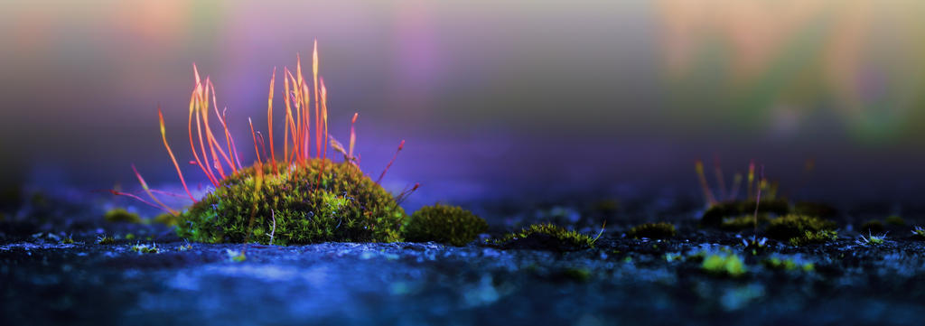 minature forest by schafsheep