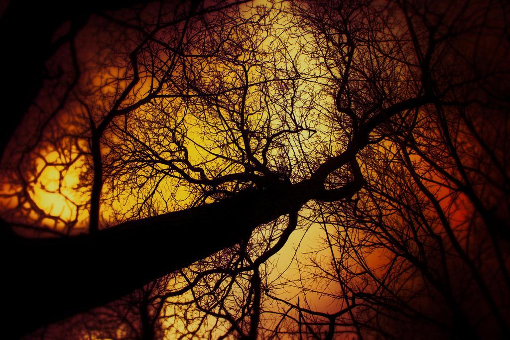 glow by schafsheep