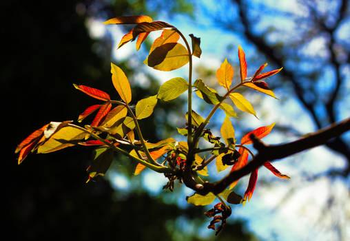 spring or autumn