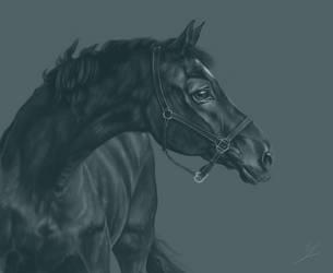 The last Black Beauty by Rubelek