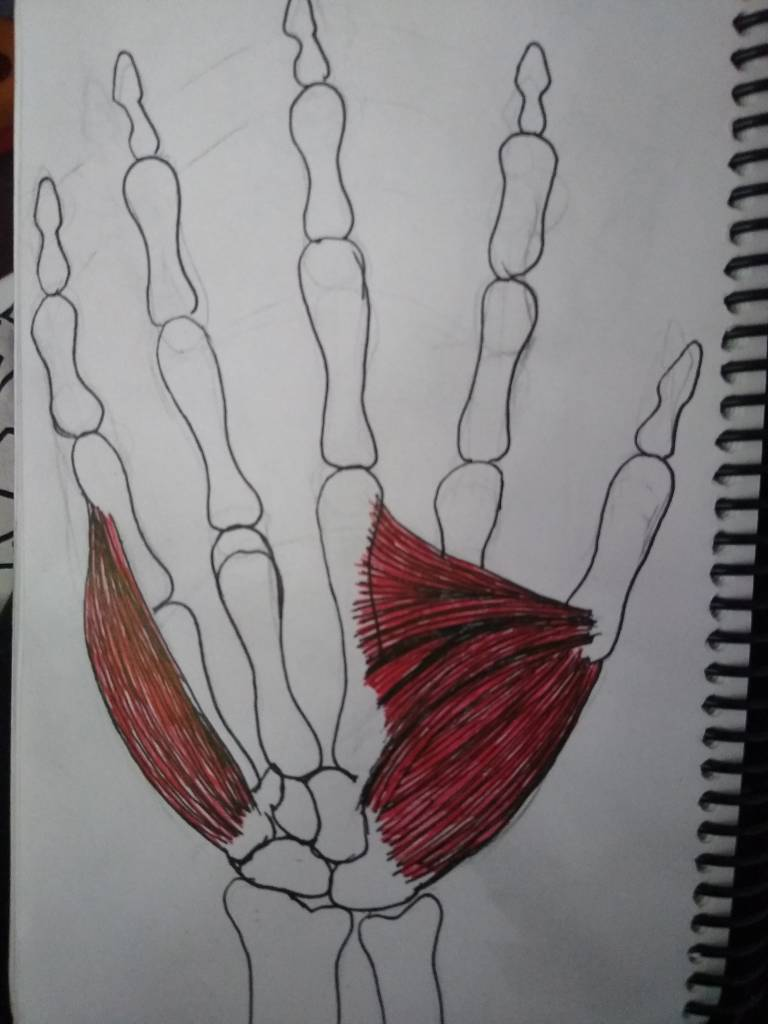 Hand Practice - Day 3: Musculoskeletal