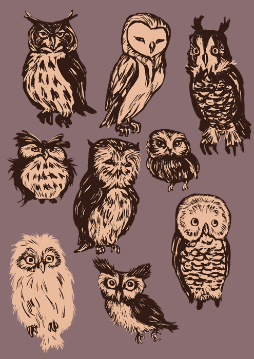 owl shapes and sizes by monaku