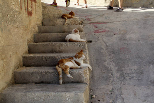 three cats on a stair