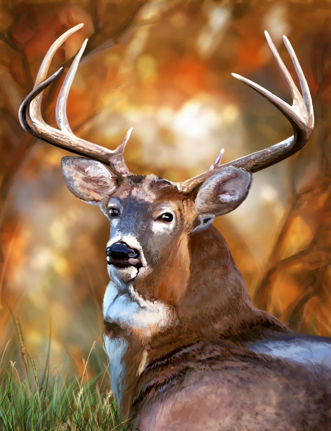 Deer's look by Vilenchik