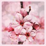 Spring flowering by Vilenchik