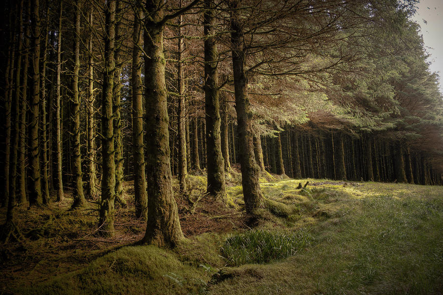 Lough Navar Forest by finkycake