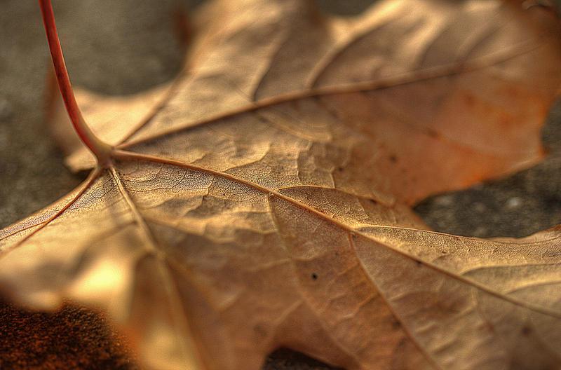 Leaf by finkycake