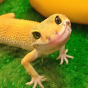 jello-bomb's Profile Picture