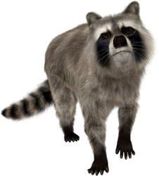 Raccoon by leochen0706