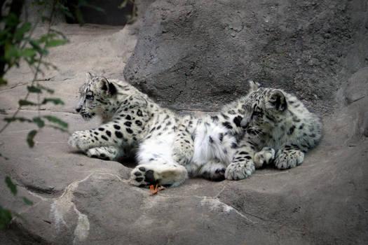 So cuddly!