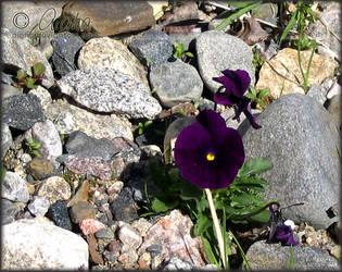 Violet ii - Defiant by aigha