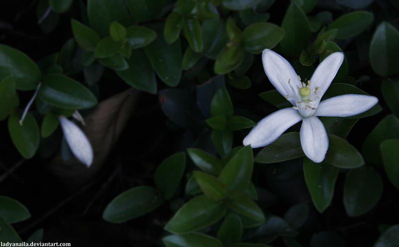 Fallen Flower by LadyAnaila